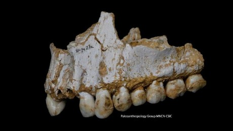 DNA analysis from tooth plaque reveals insight into  Neanderthals' behavior.