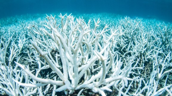 Bleached coral on Australia's Great Barrier Reef.