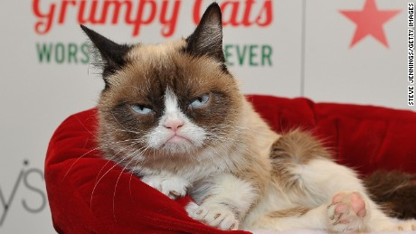"Grumpy Cat appears at Lifetime's ""Grumpy Cat's Worst Christmas Ever event"" at Macy's Union Square in 2014 in California."