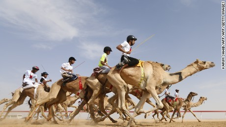 Camel racing: The multi-million dollar industry mixing modernity and tradition