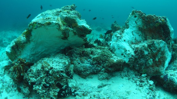Nearly 140,000 square feet of pristine reef were destroyed, a conservation official said.