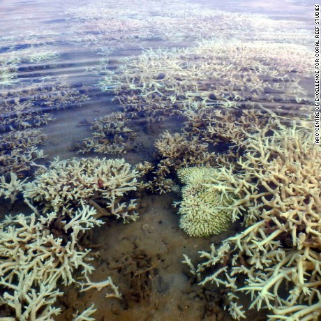 Extensive coral bleaching in the Kimberley Region of the Great Barrier Reef