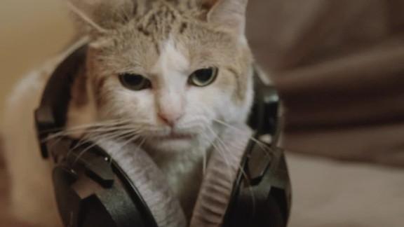 gbs composer cats pkg_00000000.jpg