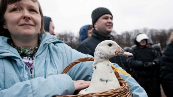 Ducks have become a symbol of anti-corruption in Russia, referencing a reported giant duck house at one of Medvedev's summer houses.