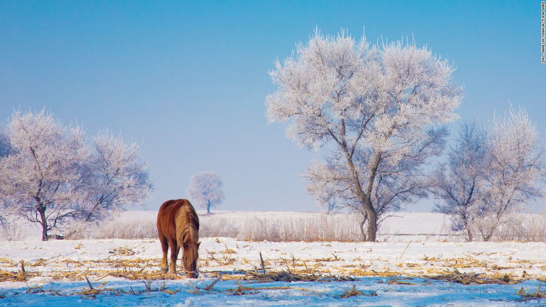 A horse grazes in Jilin City, China, on Monday, March 6.
