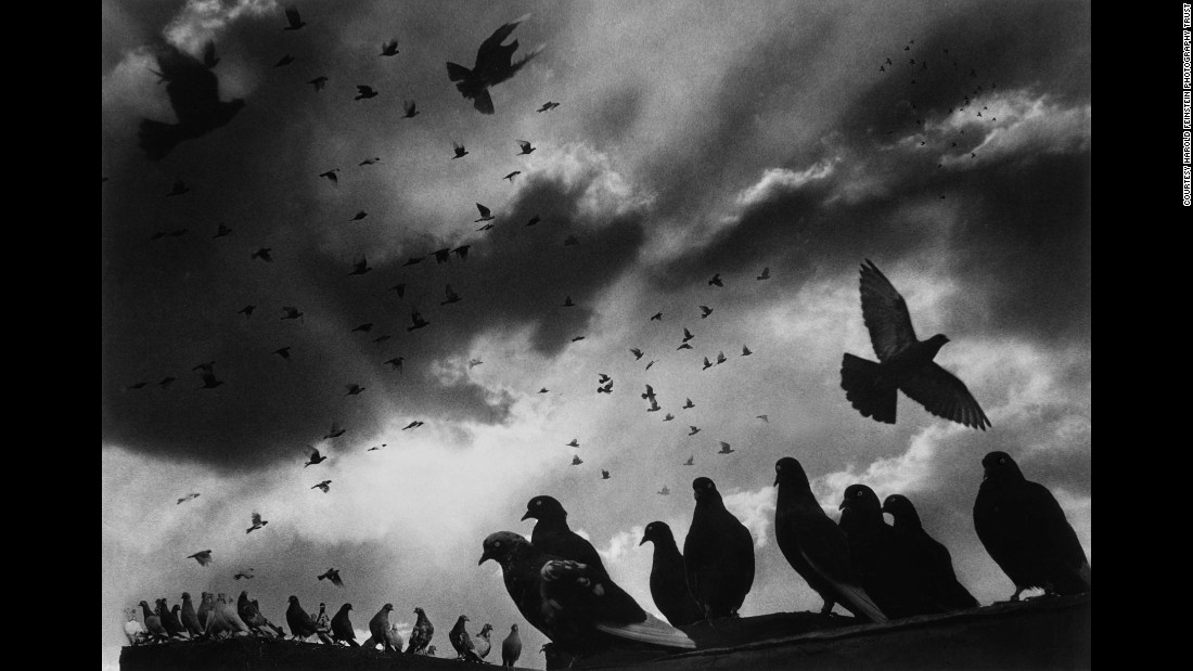 Pigeons sit on the edge of a roof in Brooklyn in 1956. This image is a montage made from nine negatives.