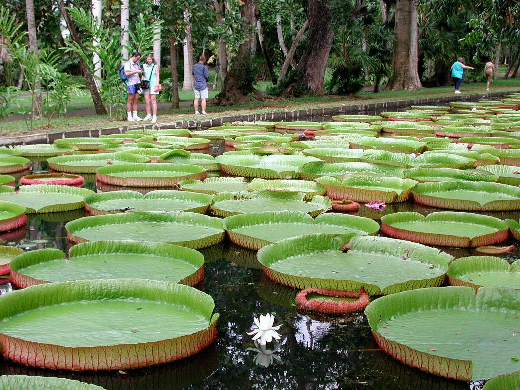 Mauritius the best african destination cnn travel izmirmasajfo