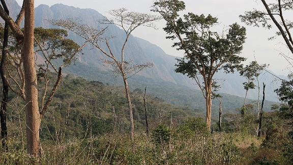 The new Angolan species' Latin name is 'galagoides kumbirensis', after the Kumbira forest where it was first observed.