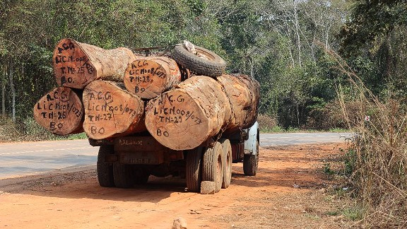 """Increased logging and agricultural activity is contributing to habitat loss, the researchers say. """"Wherever we went, we met logging trucks,"""" says Svensson."""