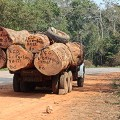 Timber logging truck in Angolan Escarpment_Simon Bearder