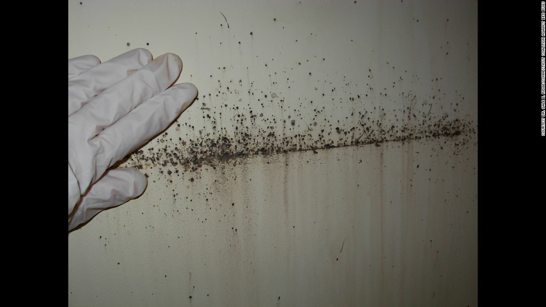 Besides The Bugs Themselves, Telltale Signs Of An Infestation Include  Reddish Brown Excrement,