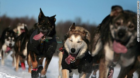Iditarod Champion Jeff King mushes his sled dog team over frozen Willow Lake.