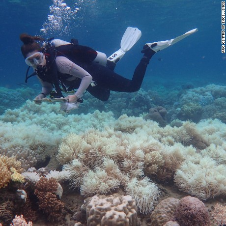 A diver inspects coral bleaching on the Great Barrier Reef in March 2017
