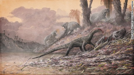 Why scientists are excited about this early dino cousin with croc-like features