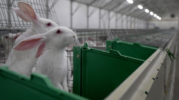 """Bunnies may be pets and friendly harbingers of Easter, but they are also often on the menu in Malta, China, Venezuela, Cyprus, France, Spain, Portugal, Russia and many other countries. Historians suggest that many American pioneers still starved to death after eating them, a phenomenon called <a href=""""https://www.ncbi.nlm.nih.gov/pubmed/16779921"""" target=""""_blank"""" target=""""_blank"""">""""rabbit starvation."""" </a>The animals don't have a lot of fat or nutritional value, for that matter."""