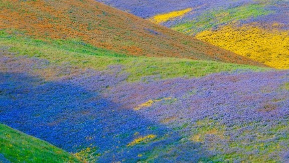 The Temblor Range in California's Carrizo Plain National Monument is covered with wildflowers