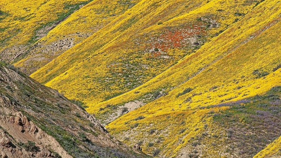 """Much-needed rain in California brought a beautiful """"super bloom"""" on Carrizo Plain National Monument in March."""
