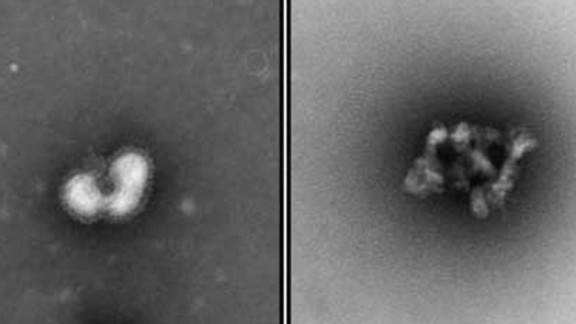A side-by-side electron microscope image of a flu virus before and after being exposed to the urumin peptide.