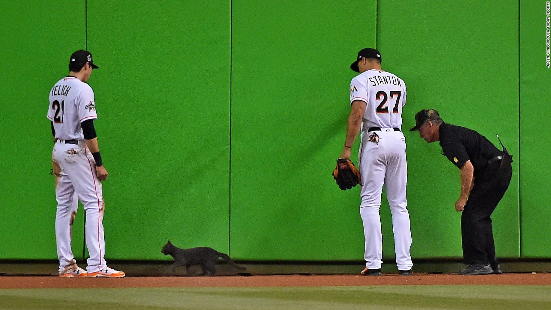 Miami left fielder Christian Yelich and right fielder Giancarlo Stanton watch as a security guard attempts to remove a cat from the field during a Major League Baseball home game against Atlanta on Tuesday, April 11. Miami won 8-4.