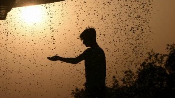 India heat sater looklive_00020519.jpg
