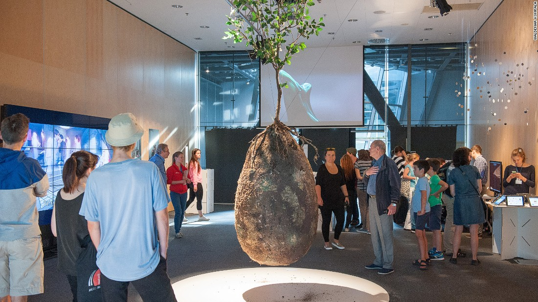 The biodegradable burial pod that turns your body into a tree – Trending Stuff