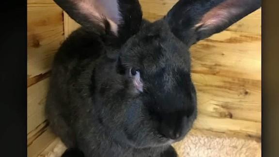 simon the bunny found dead soares_00000613.jpg