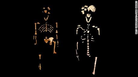 The famous ''Lucy'' skeleton, left, of Australopithecus afarensis, 3.2 million years old and on the right is the ''Neo'' skeleton of Homo naledi, 250,000 years old.