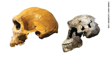 Homo naledi was very different from archaic humans that lived around the same time. Left: Kabwe skull from Zambia, an archaic human. Right: ''Neo'' skull of Homo naledi.