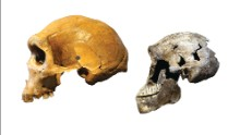 Early human species likely lived alongside us