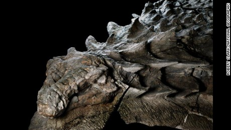 Shockingly lifelike dinosaur fossil makes public debut