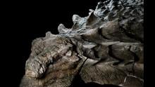 Shockingly lifelike dinosaur fossils make their public debut