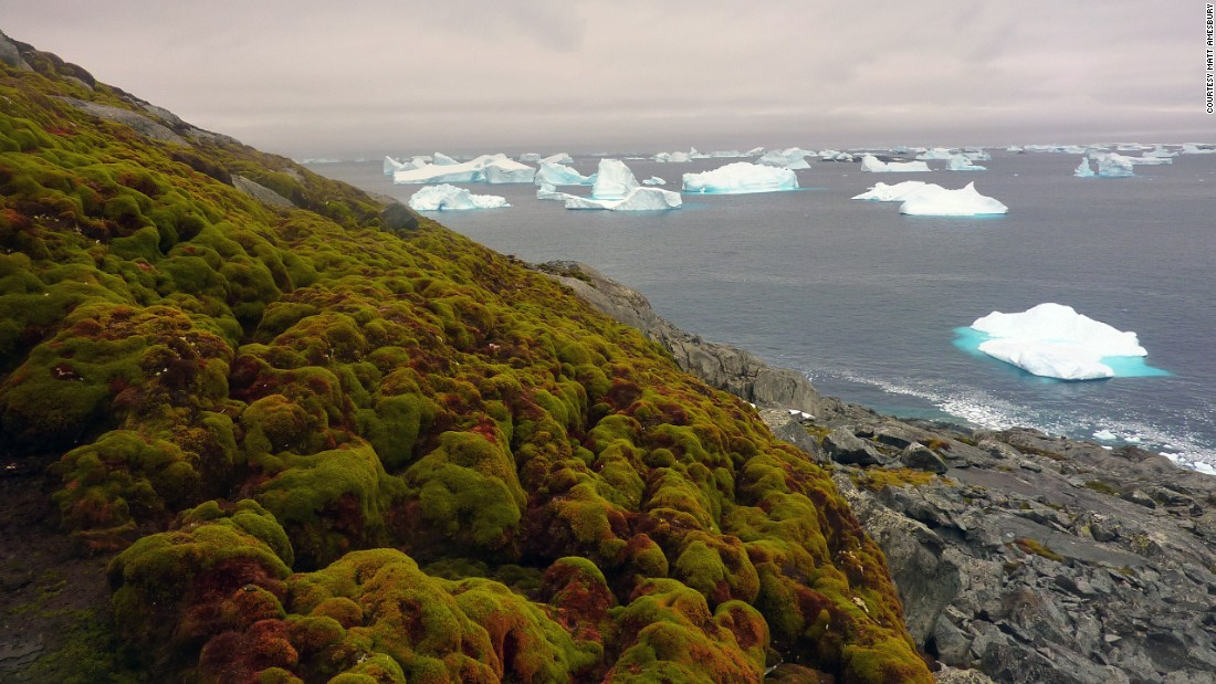 Moss is turning Antarctica's icy landscape green - CNN