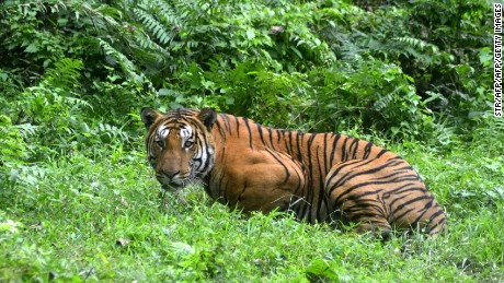 Best places to spot tigers in India