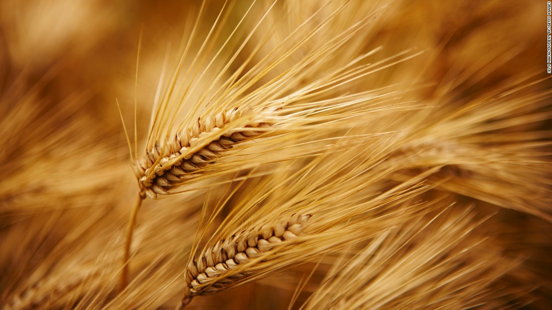 Barley is natural appetite suppressant containing a combination of dietary fibers that make it extra filling.