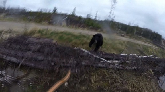 bear attacks hunter
