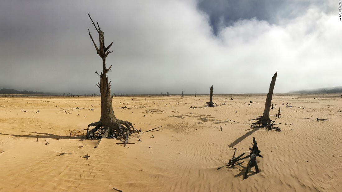 Sand and dry trees stand on April 16 at the Theewaterskloof Dam, where the water level has been extremely low.
