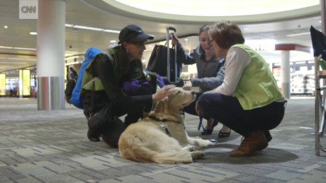reduce travel stress airport therapy dogs sm nccorig_00000920.jpg