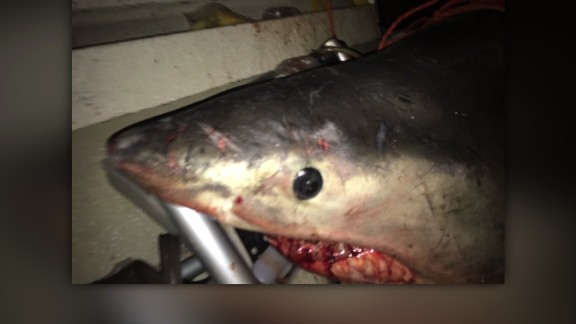 Australia shark jumps onto boat
