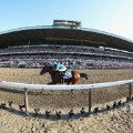 american pharoah belmont stakes 147th running