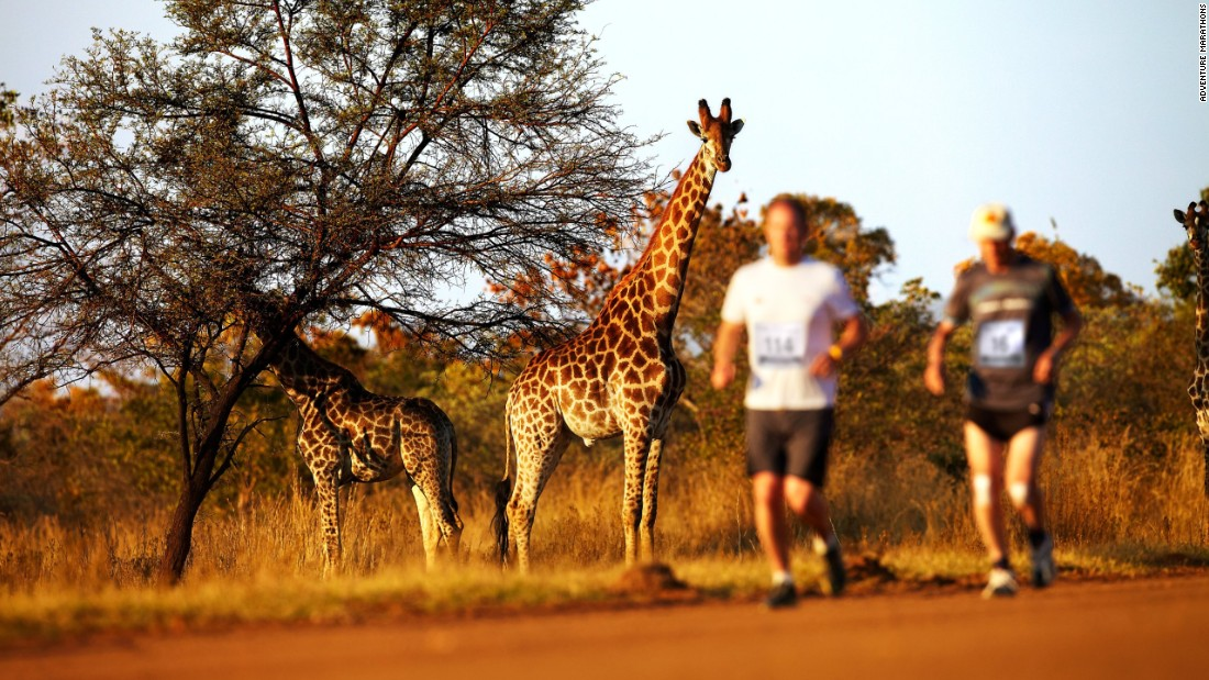 Among the races organized by Albatros is the Big Five Marathon. Founded in 2005, it takes place on the Entabeni Safari Conservancy in South Africa. The reserve is diverse, taking in mountains, plains, bush, wetlands -- and a few animals as well.