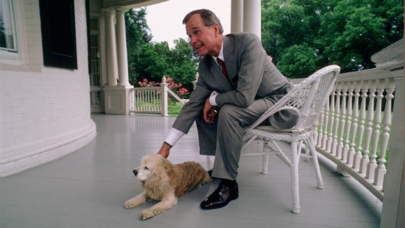 WASHINGTON, DC -- CIRCA 1983: U.S. Vice President George H.W. Bush  and the Bush's Golden Cocker Spaniel, C. Fred, at the Vice President's residence circa 1983 in Washington, DC. (Photo by David Hume Kennerly/Getty Images)