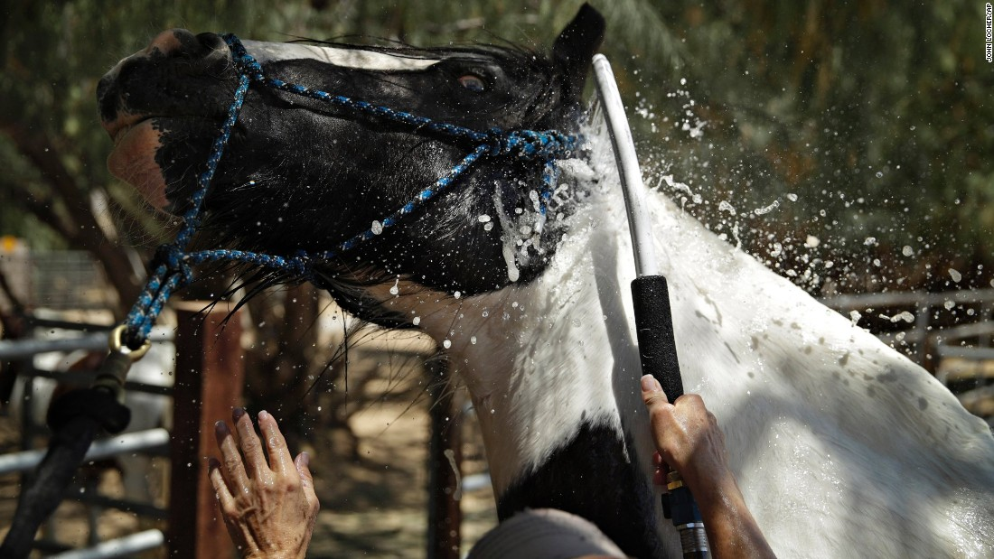 Lori Mantz sprays water to cool down her horse Thor in Las Vegas on June 19.