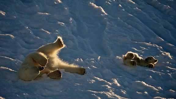 (Dominic Barrington/Hurtigruten Svalbard)