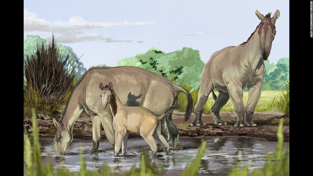 "An artist's reconstruction shows Macrauchenia patachonica, which roamed South America thousands of years ago. Combining a range of odd characteristics from llamas and camels to rhinos and antelopes, <a href=""http://www.cnn.com/2017/06/27/world/extinct-animal-ungulate-macrauchenia-darwin-tree-of-life/index.html"">Macrauchenia</a> defied clarification until now and has been added to the tree of life. It belongs to a sister group of Perissodactyla, which includes horses, rhinos and tapirs."