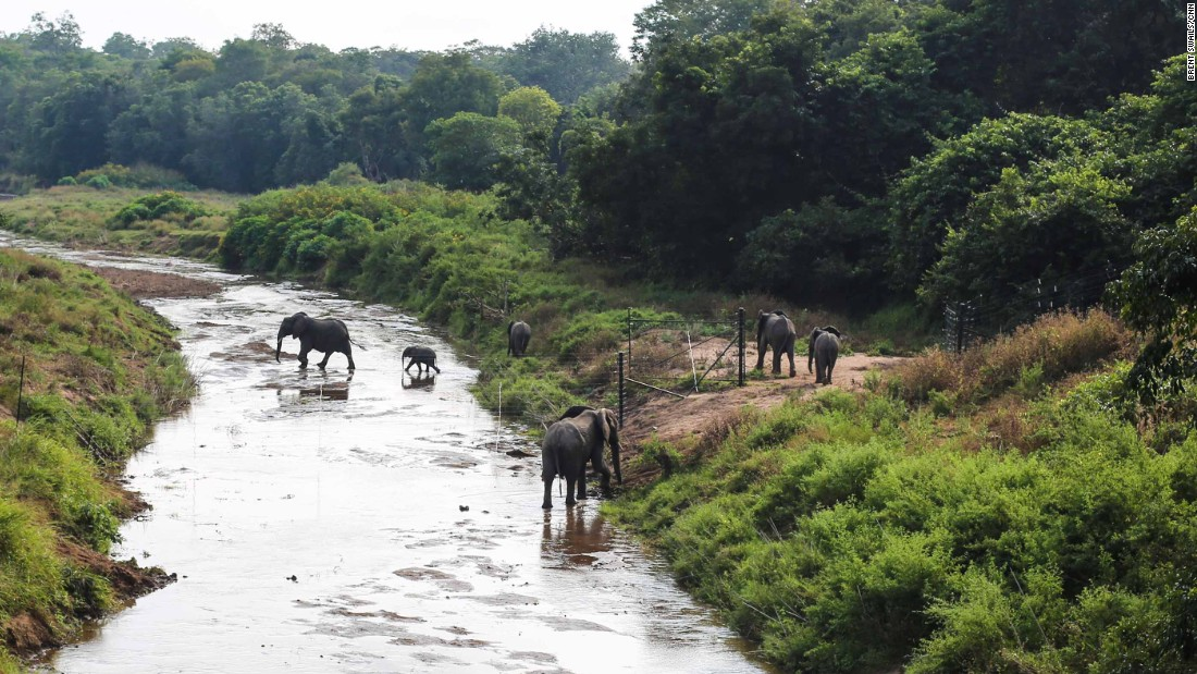 "Elephants venture out into their new home, Nkhotakota Wildlife Reserve. The park once had an elephant population of 1,500, until poachers slaughtered all but 70 of the animals. ""The park was under siege,"" says manager Samuel Kamoto."