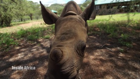 Inside Africa How technology saved an abandoned baby rhino C_00042730