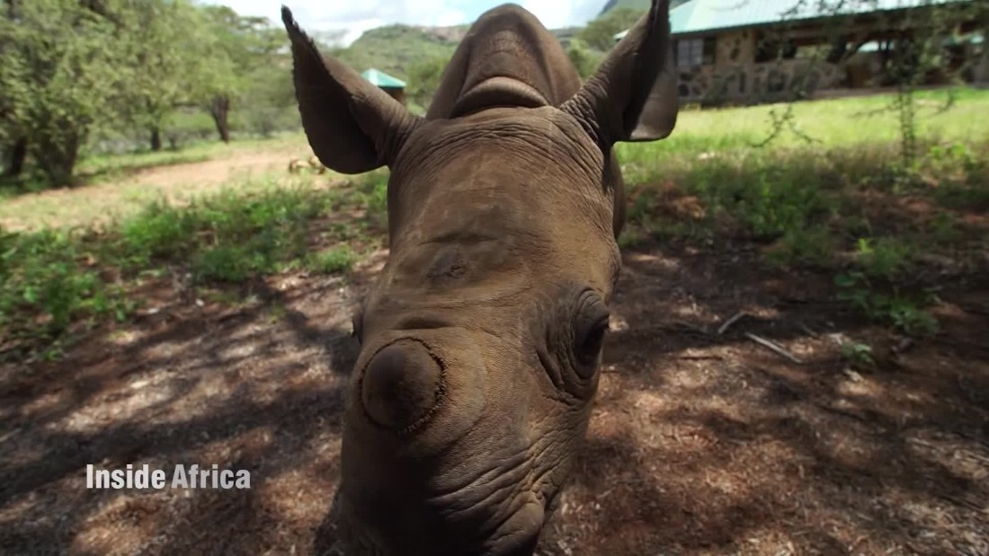 How technology saved an abandoned baby rhino