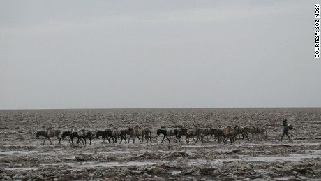 An Afar man and his donkeys cross the hot plains of the Danakil Depression.