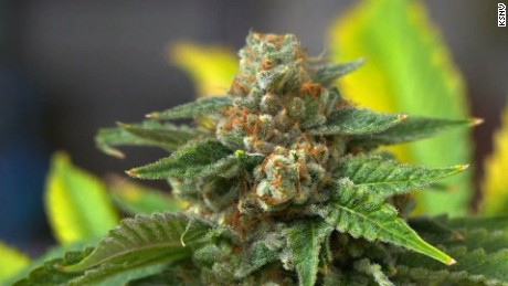 Marijuana debate - CNN