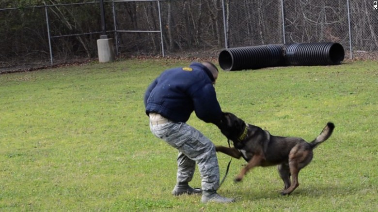 US military K-9 dog units work hard, play hard